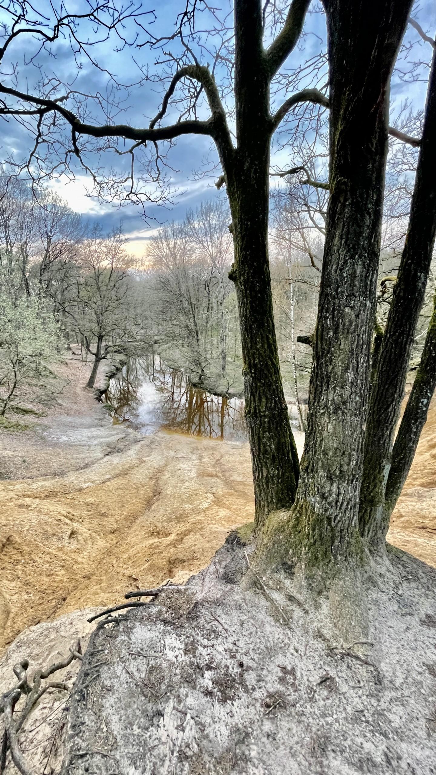 natuur limburg